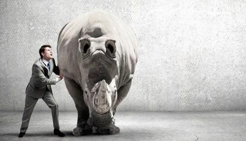 A bússola e o rinoceronte: sobre direção, foco e resiliência